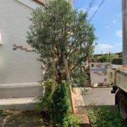 支柱が施された庭木