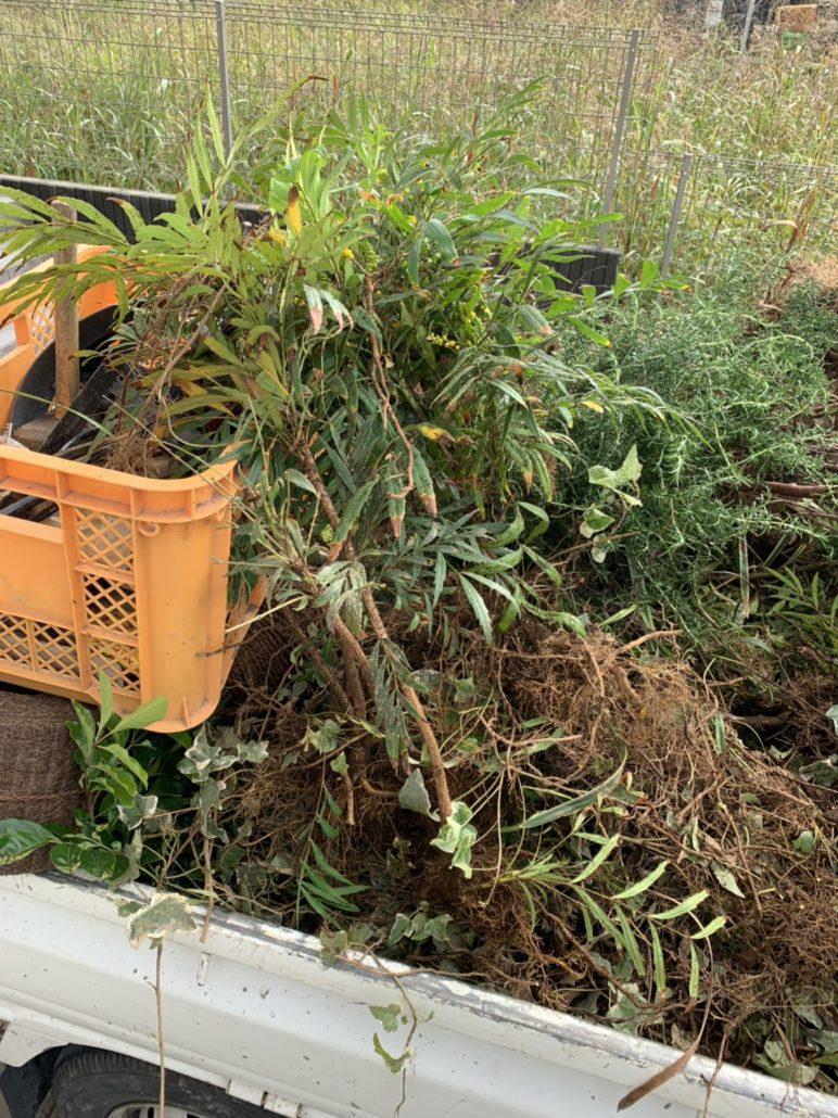 庭木の伐採や草刈り・草むしり
