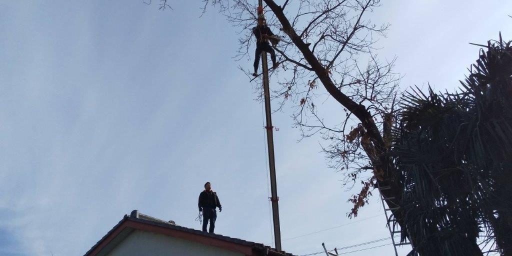 高木に上っている職人