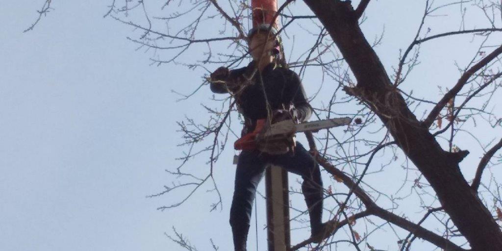 枝を切る職人