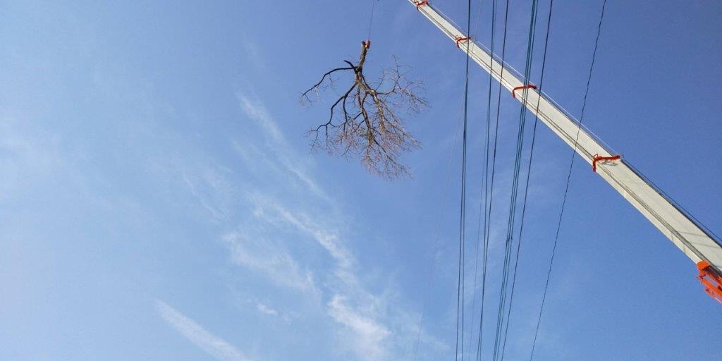 枝を下ろしている様子