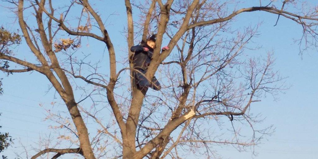 高木で作業中の職人